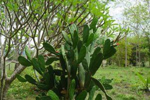 ...Cactus...