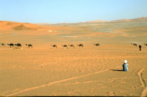 Camels and Chlk Pans close to Ghat | Libya